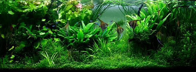 jungle-style